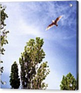 Seagull Fly By Wc 2 Ae  Acrylic Print