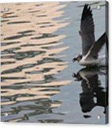 Seagull Fun Acrylic Print