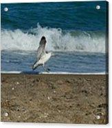 Seagull Landing Acrylic Print