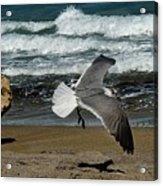 Seagull Landing Hutchinson Island, Fl Acrylic Print