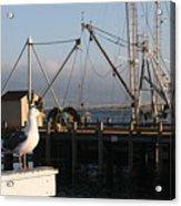 Seagull Morro Bay California Acrylic Print