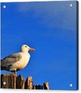 Seagull On A Dock Acrylic Print