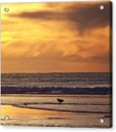 Seagull On A Sandbar Acrylic Print