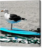 Seagull On A Surfboard Acrylic Print