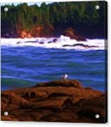 Seagull On Rock Acrylic Print