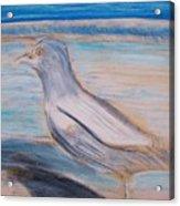 Seagull  On Seashore Acrylic Print