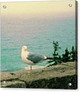 Seagull On Stone Wall Acrylic Print