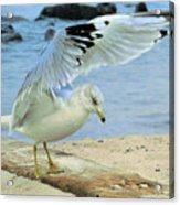 Seagull On The Beach Acrylic Print