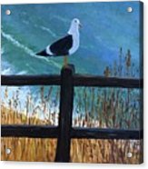 Seagull On The Fence Acrylic Print