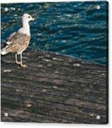 Seagull On The Pier Acrylic Print