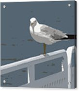 Seagull On The Rail Acrylic Print