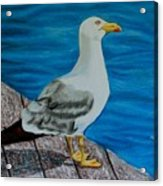 Seagull On The Shore - Gaviota En La Costa Acrylic Print