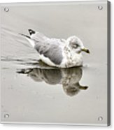 Seagull Reflections Acrylic Print