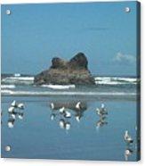 Seagull Reflections Acrylic Print