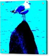Seagull Scout Acrylic Print