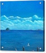 Seagull Seascape IIi Acrylic Print