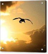 Seagull Silhouette Acrylic Print