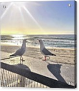 Seagull Sonnet  Acrylic Print