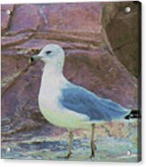 Seagull Strut Acrylic Print