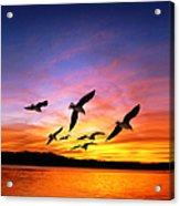Seagull Sunset   Acrylic Print