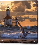 Seagull Takeoff - Tiscornia Beach  Acrylic Print