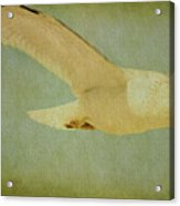 Seagull Texture Acrylic Print