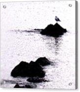 Seagull Waiting Acrylic Print