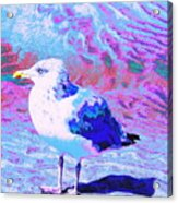 Cool And Colorful Gull Acrylic Print