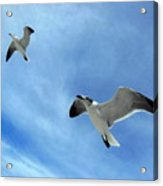 Seagulls # 6 Acrylic Print