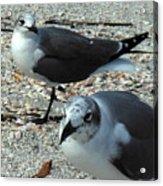 Seagulls #3 Acrylic Print