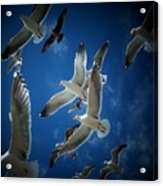 Seagulls Above Acrylic Print