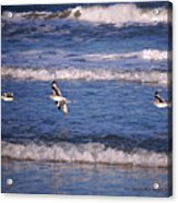 Seagulls Above The Seashore Acrylic Print
