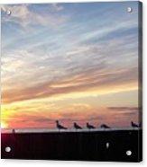 Seagulls And Sunset On Lake Erie Acrylic Print