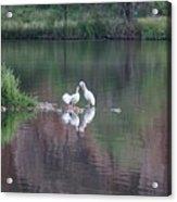 Seagulls At Lake Acrylic Print