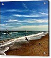 Seagulls At The Beach Acrylic Print