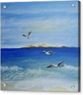 Seagulls By The Sea Acrylic Print