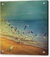 Seagulls Flying Acrylic Print by Istvan Kadar Photography