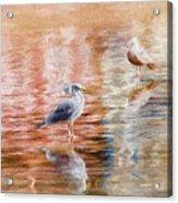 Seagulls - Impressions Acrylic Print