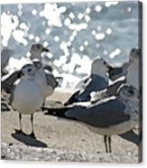 Seagulls In The Cold Sun Acrylic Print
