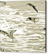 Seagulls Landing Tampa Florida Acrylic Print