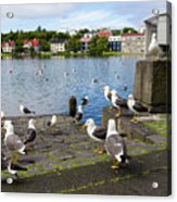 seagulls near a pond in the center of Reykjavik Acrylic Print