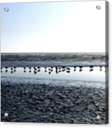 Seagulls On A Sandbar Acrylic Print