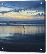 Seagulls On Beach At Sunset Acrylic Print