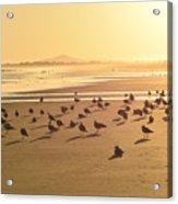 Golden Shore Acrylic Print