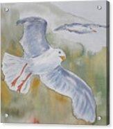 Seagulls Over Glacier Bay Acrylic Print