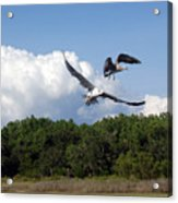 Seagulls Over Marsh Acrylic Print