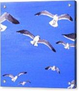 Seagulls Overhead Acrylic Print