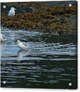 Seagulls-signed-#9360 Acrylic Print