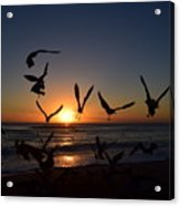 Seagulls Silhouettes Acrylic Print