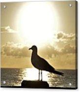 Seagull's Sunrise Silhouette Acrylic Print